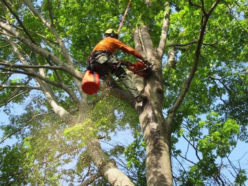 Century Trees, Inc