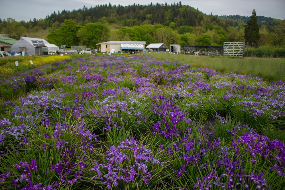 Friends of Buford Park & Mt. Pisgah's Native Plant Nursery
