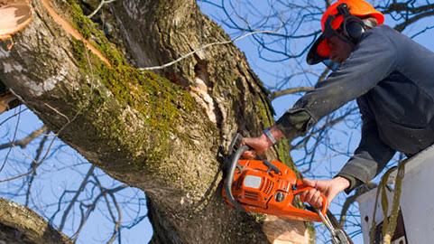 Hodgson Tree Service Inc.